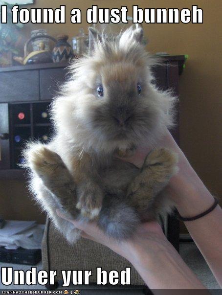 dust-bunny2